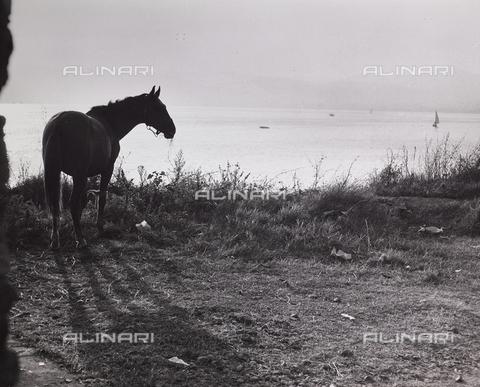 CGD-F-000237-0000 - Cavallo sulla riva di un lago - Data dello scatto: 1955-1965 - Raccolte Museali Fratelli Alinari (RMFA)-donazione Corinaldi, Firenze