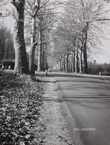 CGD-F-000326-0000 - Tree-lined avenue in the autumn - Date of photography: 1955-1965 - Fratelli Alinari Museum Collections-Corinaldi Donation, Florence