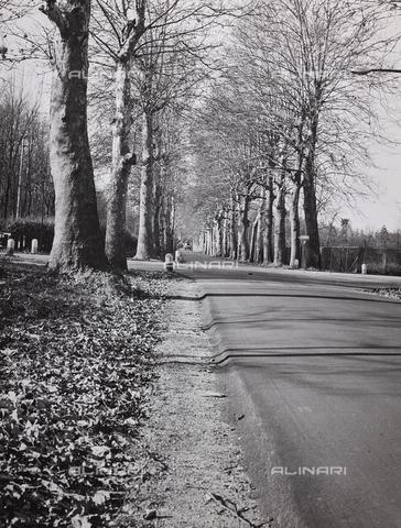 CGD-F-000326-0000 - Viale alberato in autunno - Data dello scatto: 1955-1965 - Raccolte Museali Fratelli Alinari (RMFA)-donazione Corinaldi, Firenze