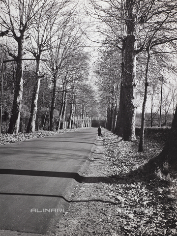 CGD-F-000328-0000 - Tree-lined avenue in the autumn - Data dello scatto: 1955-1965 - Fratelli Alinari Museum Collections-Corinaldi Donation, Florence