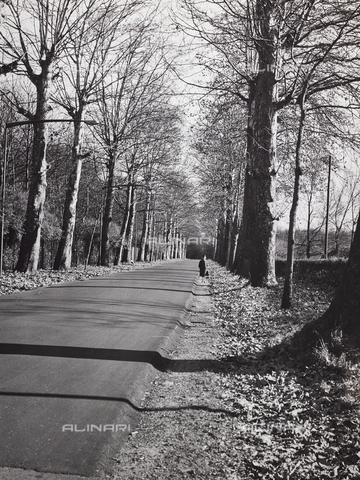 CGD-F-000328-0000 - Viale alberato in autunno - Data dello scatto: 1955-1965 - Raccolte Museali Fratelli Alinari (RMFA)-donazione Corinaldi, Firenze