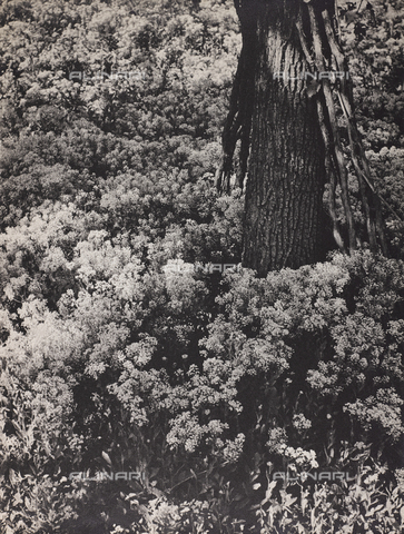 """CGD-F-000737-0000 - """"Spring"""" - Date of photography: 1955-1965 - Fratelli Alinari Museum Collections-Corinaldi Donation, Florence"""