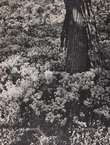 """CGD-F-000737-0000 - """"Primavera"""" - Data dello scatto: 1955-1965 - Raccolte Museali Fratelli Alinari (RMFA)-donazione Corinaldi, Firenze"""