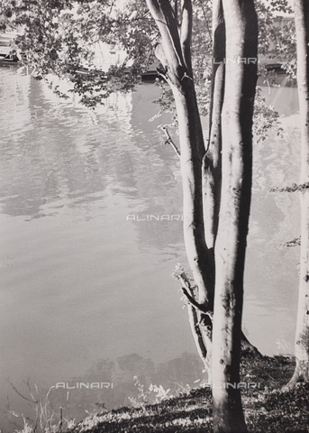 """CGD-F-000742-0000 - """"The sentinel of the lake"""" - Date of photography: 1955-1965 - Fratelli Alinari Museum Collections-Corinaldi Donation, Florence"""