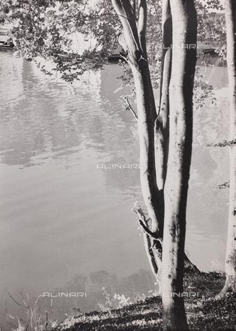 """CGD-F-000742-0000 - """"La sentinella del lago"""" - Data dello scatto: 1955-1965 - Raccolte Museali Fratelli Alinari (RMFA)-donazione Corinaldi, Firenze"""