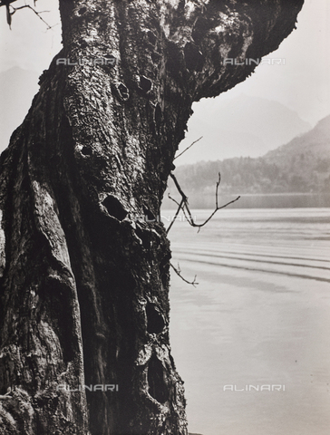 """CGD-F-000743-0000 - """"The sentinel of the lake"""" - Date of photography: 1955-1965 - Fratelli Alinari Museum Collections-Corinaldi Donation, Florence"""