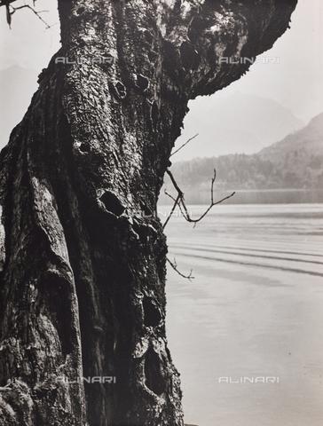 """CGD-F-000743-0000 - """"La sentinella del lago"""" - Data dello scatto: 1955-1965 - Raccolte Museali Fratelli Alinari (RMFA)-donazione Corinaldi, Firenze"""