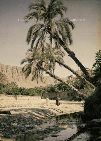 CHA-F-AU0002-0000 - Oasis at Al Kantara, Tunisia - Data dello scatto: 1900-1910 ca. - Archivi Alinari, Firenze