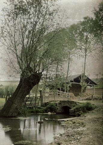 CHA-F-AU0613-0000 - Country landscape in Switzerland - Data dello scatto: 1910-1920 ca. - Archivi Alinari, Firenze
