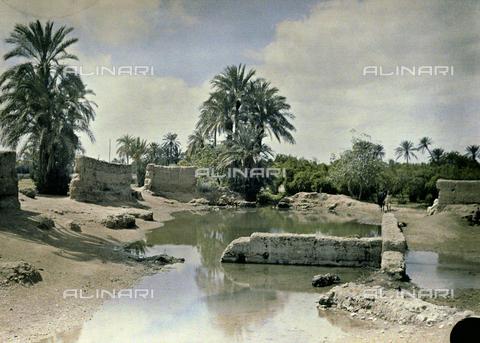 CHA-F-AU0623-0000 - A Marrakesh oasis, Morocco - Data dello scatto: 1907 - Archivi Alinari, Firenze