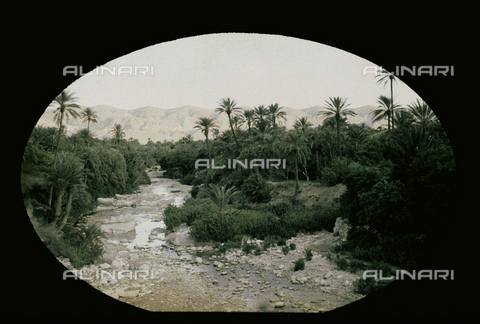 CHA-F-AU0631-0000 - An oasis of El Kantara, in Tunisia - Data dello scatto: 1907-1913 - Archivi Alinari, Firenze
