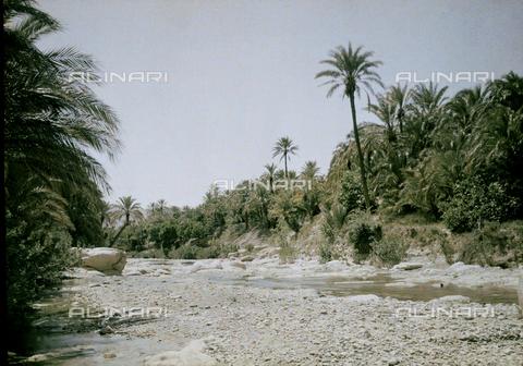 CHA-F-AU0632-0000 - An oasis of El Kantara, in Algeria - Data dello scatto: 1907-1913 - Archivi Alinari, Firenze