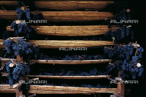 DAL-F-000230-0000 - S. Casciano Val di Pesa. Grappoli d'uva sistemati su stuoie per l'essicazione - Data dello scatto: 1987 - Archivi Alinari, Firenze
