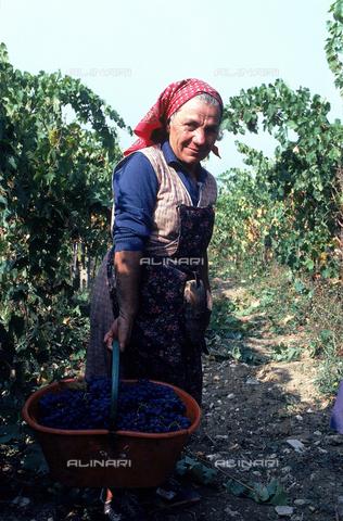 DAL-F-000690-0000 - Una donna sorregge un paniere con l'uva, durante la vendemmia a Verrazzano nel Chianti. - Data dello scatto: 1987 - Archivi Alinari, Firenze