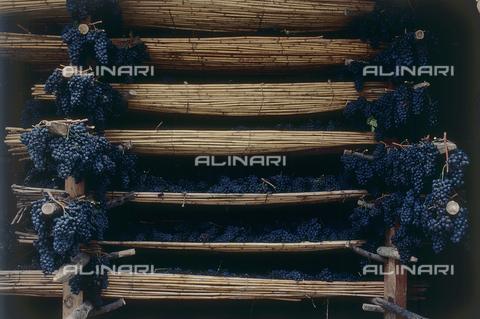 DAL-F-000691-0000 - Grappoli d'uva - Data dello scatto: 1987 - Archivi Alinari, Firenze