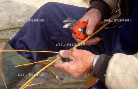 DAL-F-005174-0000 - Primo piano delle mani di un uomo intento nella lavorazione del vimini. Montegufoni, Montespertoli. - Data dello scatto: 11/03/1992 - Archivi Alinari, Firenze