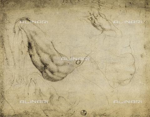 DIS-F-000418-0000 - Anatomic study with a bent leg, Gabinetto dei Disegni e delle Stampe, Uffizi Gallery, Florence
