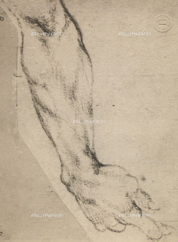DIS-F-000852-0000 - Study of an arm, Michelangelo, Casa Buonarroti, Florence