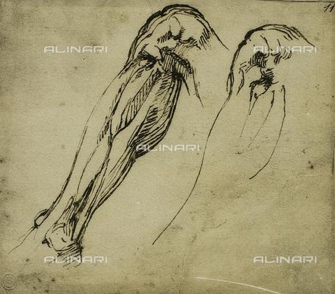 DIS-F-000862-0000 - Anatomic studies of a leg, Michelangelo, Casa Buonarroti, Florence