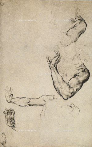 DIS-F-001018-0000 - Anatomical study for Adam of the Sistine Chapel; drawing by Michelangelo. Casa Buonarroti, Florence