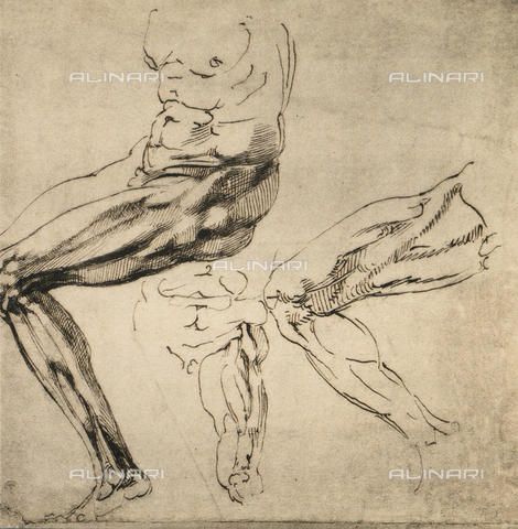 DIS-F-001022-0000 - Study of masculine limbs; drawing by Michelangelo. Casa Buonarroti, Florence