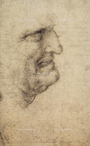 DIS-F-001059-0000 - Studio per volto: testa di vecchio, Leonardo da Vinci, Gallerie dell'Accademia, Venezia