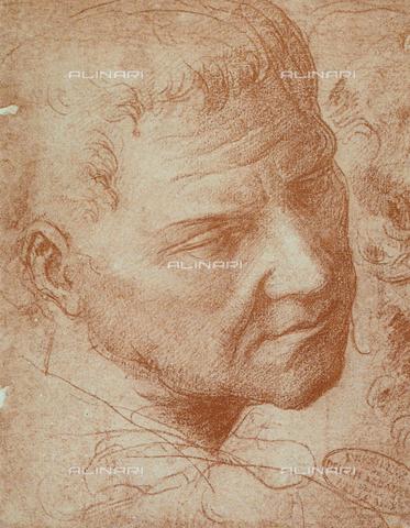 DIS-F-001082-0000 - Testa maschile; disegno di Michelangelo conservato alle Gallerie dell'Accademia a Venezia