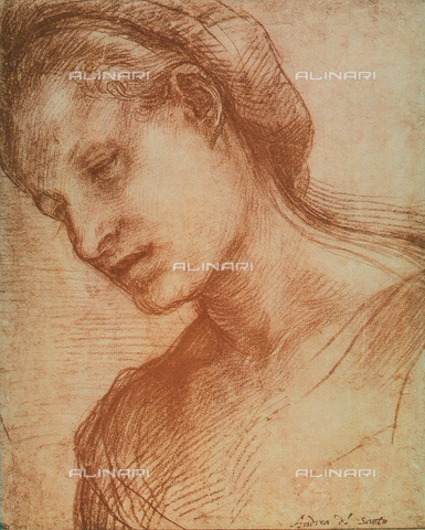 DIS-F-001268-0000 - Woman's head, Andrea del Sarto, The Louvre, Paris