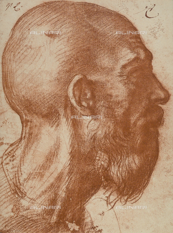DIS-F-001278-0000 - Man's head in profile, Andrea del Sarto, The Louvre, Paris