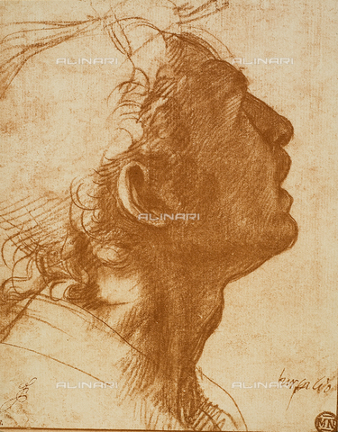 DIS-F-001283-0000 - Male Head; drawing by Andrea del Sarto. The Louvre, Paris