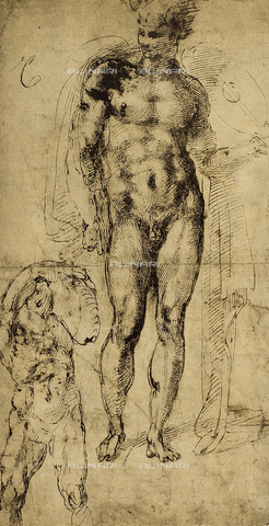 DIS-F-001341-0000 - Study of nudes, drawing, Michelangelo, The Louvre, Paris