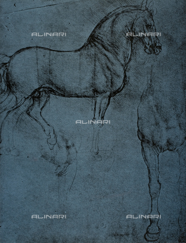 DIS-F-004044-0000 - Study of a horse, drawing, Royal Library, Windsor.
