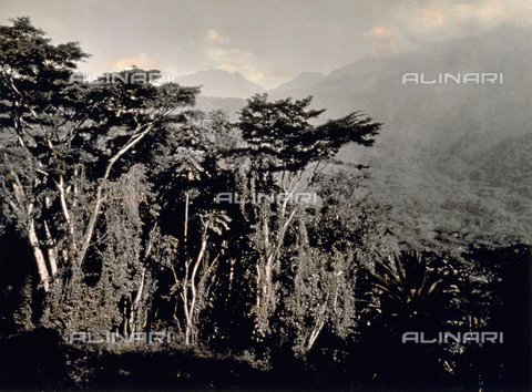 FBQ-F-002257-0000 - Characteristic view of vegetation in Mobuku Ruwenzori valley, in Zaire - Data dello scatto: 1906 - Archivi Alinari, Firenze