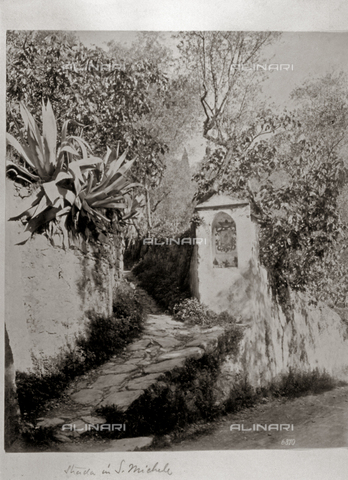 FBQ-F-003240-0000 - Charming view of a dirt road in the wooded environs of Camogli, in Liguria. In the foreground, a cobbled lane winds along with high walls on either side. On the right side of the lane, in a corner of the wall, is a niche, containing a sacred image - Data dello scatto: 1870 -1890 ca. - Archivi Alinari, Firenze