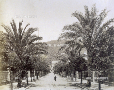 FBQ-F-004420-0000 - Viale delle Palme, in Nervi. In the background the hills with luxuriant vegetation - Data dello scatto: 1890 ca. - Archivi Alinari, Firenze