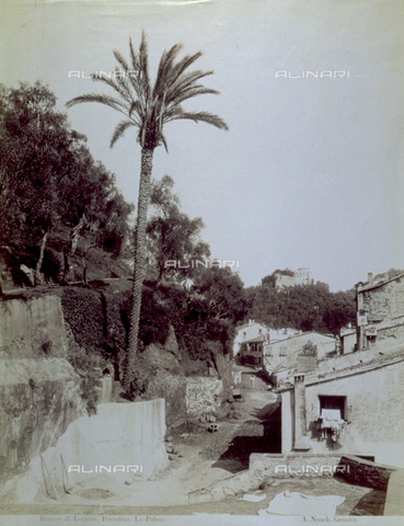 FBQ-F-004928-0000 - Picturesque view of a road in Portofino, with olive trees and small houses on either side. On the left a solitary palm rises up to the sky - Data dello scatto: 1870 -1880 ca. - Archivi Alinari, Firenze