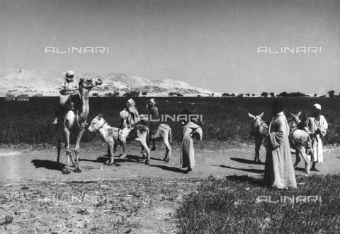 FCA-F-000153-0000 - Gruppo di beduini con alcuni asini e un cammello, Egitto - Data dello scatto: 1950-1960 - Archivi Alinari, Firenze