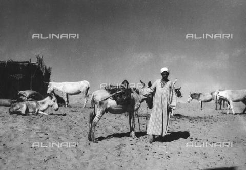 FCA-F-000154-0000 - Beduino con alcuni asini, Egitto - Data dello scatto: 1950-1960 - Archivi Alinari, Firenze