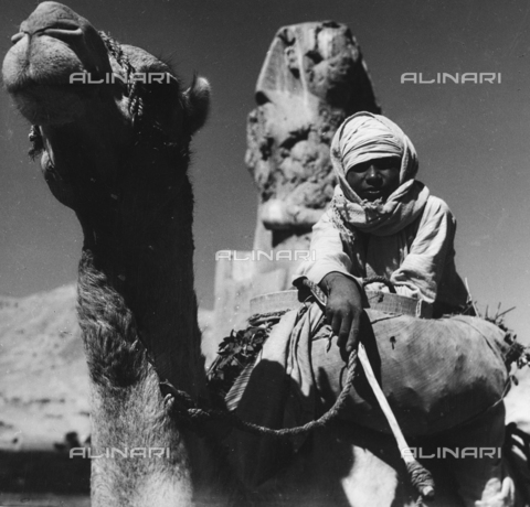 FCA-F-000156-0000 - Ragazzo beduino su cammello, Egitto - Data dello scatto: 1950-1960 - Archivi Alinari, Firenze