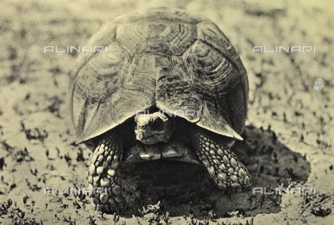 FCC-A-000067-0191 - Turtle