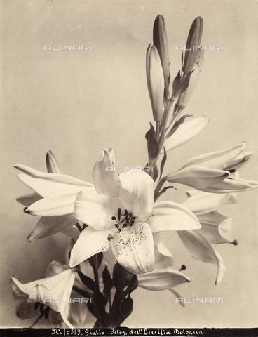 FCC-F-014500-0000 - Irises