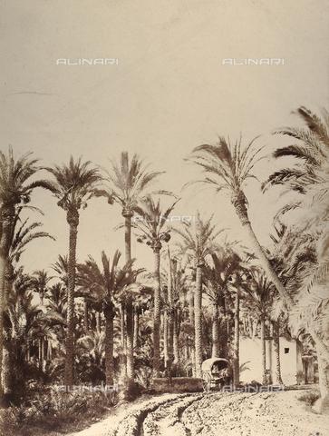 FCC-F-021173-0000 - Palme - Data dello scatto: 1856 - Raccolte Museali Fratelli Alinari (RMFA)-collezione Favrod, Firenze