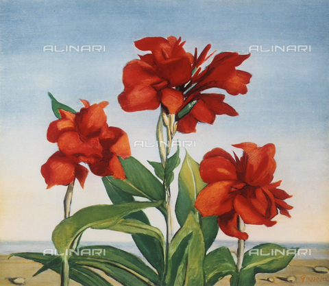 FDC-F-001198-0000 - Red calla lilies; painting by Romano Gazzero. Marconi Collection, Milan