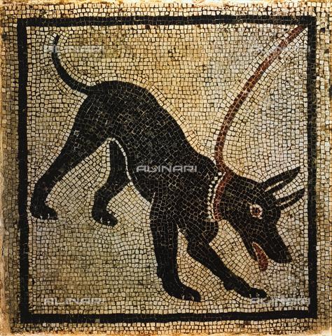 FDC-F-001261-0000 - Mosaico con figura di cane, Museo Archeologico Nazionale, Napoli