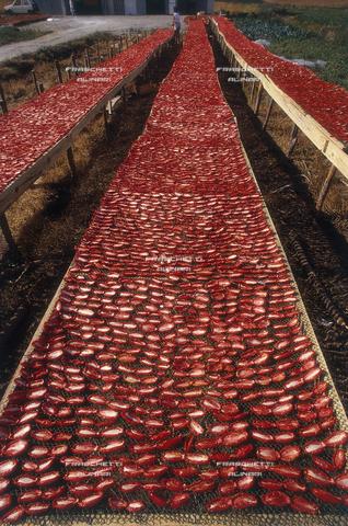 FMA-F-000273-0000 - Sila, essiccatura dei pomodori sottolio