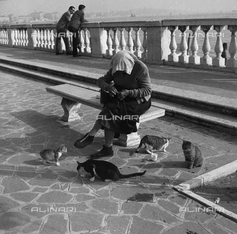 FVA-S-780002-0003 - An elderly woman surrounded by cats on a terrace on the laguna of Venice