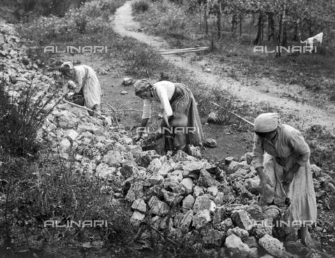 FVD-S-006542-0B15 - Donne che sistemano un muro di pietre - Data dello scatto: 1895-1910 - Donazione Biondi / Archivi Alinari, Firenze