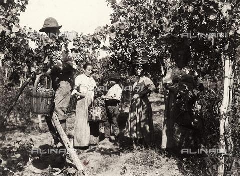 FVD-S-006542-0B18 - Vendemmia - Data dello scatto: 1895-1910 - Donazione Biondi / Archivi Alinari, Firenze