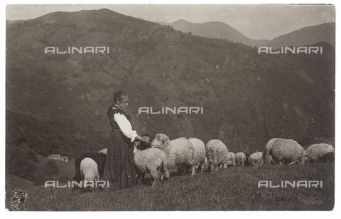 FVD-S-006542-0E11 - Paesaggio con gregge - Data dello scatto: 1895-1910 - Donazione Biondi / Archivi Alinari, Firenze