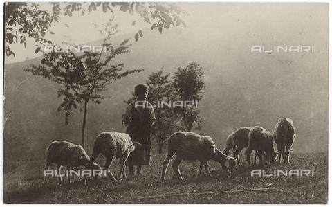 FVD-S-006542-0E13 - Pastorella con gregge - Data dello scatto: 1895-1910 - Donazione Biondi / Archivi Alinari, Firenze